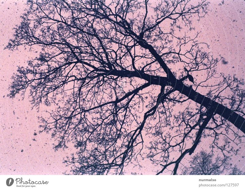 Water Tree Leaf Winter Cold Emotions Lanes & trails Snowfall Park Ice Pink To go for a walk Simple To fall Farm