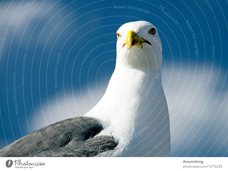 Sky Nature Blue Summer White Clouds Animal Travel photography Environment Yellow Eyes Gray Bird Bright Head Weather