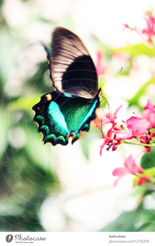 green dovetail for glückimwinkl Nature Plant Animal Spring Summer Flower Leaf Blossom Garden Park Meadow Wild animal Butterfly Wing green swallowtail 1 Observe