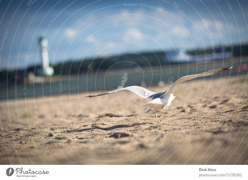 Sky Nature Vacation & Travel Blue White Ocean Clouds Animal Beach Environment Natural Coast Bird Sand Horizon Tourism