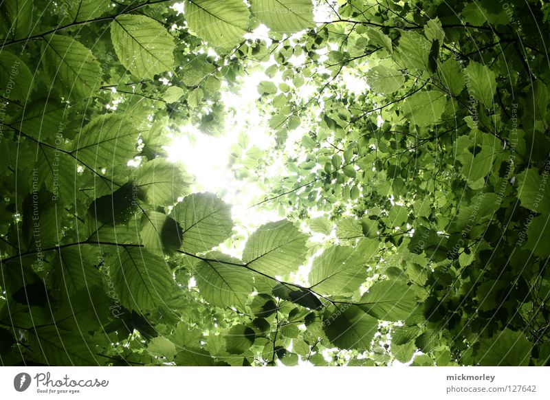 SIT DOWN AND RELAX Leaf Wood flour Forest Summer Jump Spring Fresh To go for a walk Growth Beautiful leaves left over Branch Sun Digital photography Colour