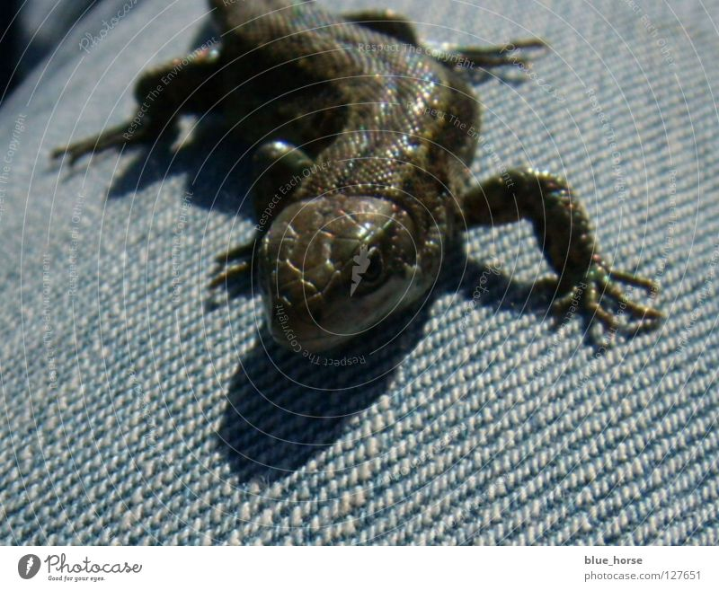 Beautiful Blue Animal Glittering Small Speed Jeans Middle Smoothness Reptiles Saurians