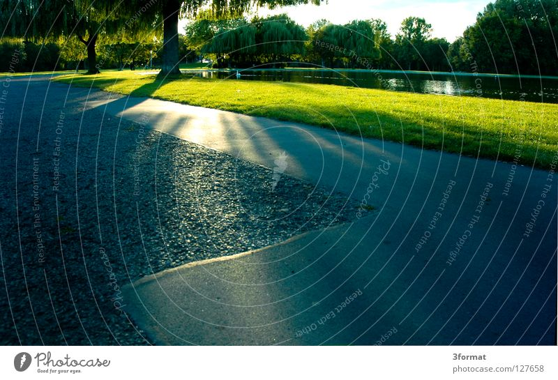 crazy Park Green Back-light Summer Evening sun Concrete Asphalt Lake Meadow Pond Body of water To go for a walk Leisure and hobbies Water fountain Closing time