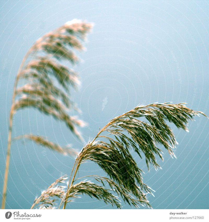 Sky Nature Green Blue Autumn Grass Coast Lake Brown Field Wind Gale Grain Ear of corn Breeze Structures and shapes