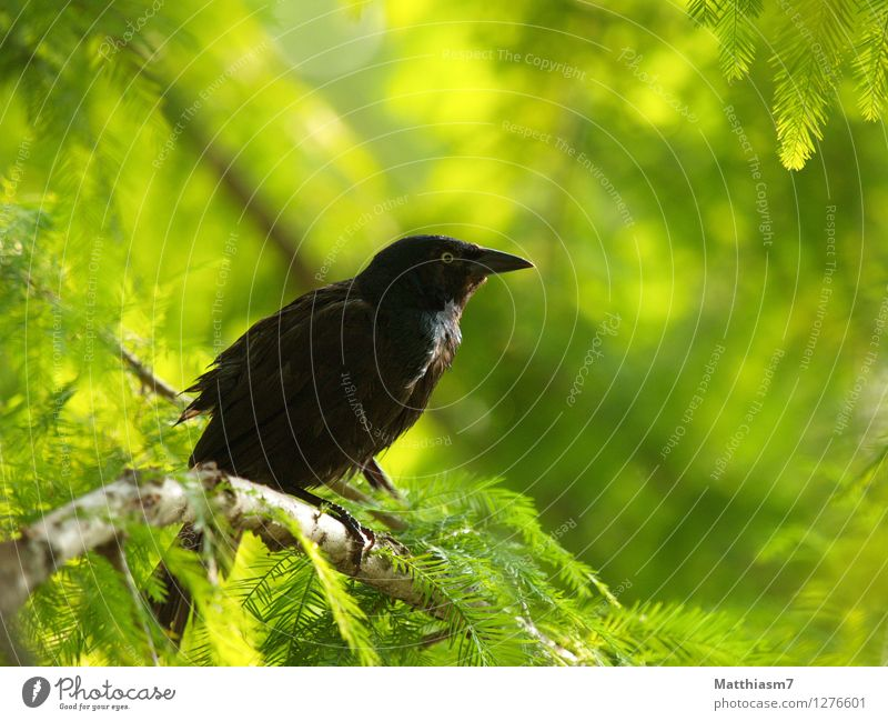 Jackdaw Nature Plant Summer Sun Tree Relaxation Loneliness Animal Far-off places Forest Bird Contentment Wild animal Wing Joie de vivre (Vitality) Watchfulness