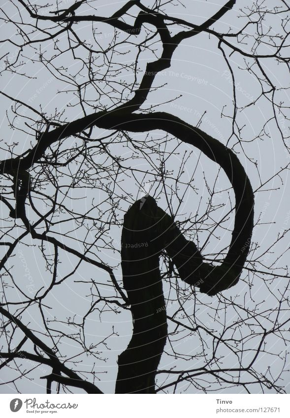 Sky Winter Black Gray Gloomy Branch Thought Treetop Twig Muddled Branchage