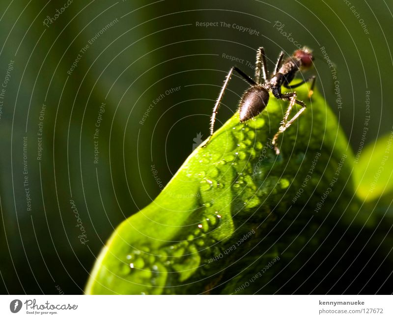 Ant Story Macro (Extreme close-up) Close-up indonesia ant morning dew insect adventure Blur