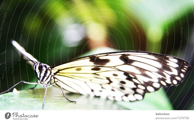 fabric pattern Nature Animal Spring Summer Garden Park Meadow Wild animal Butterfly Animal face Wing White tree nymph Observe Flying Sit Exceptional Elegant