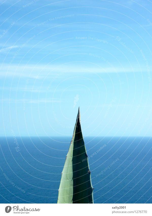 Sky Nature Blue Plant Green Ocean Loneliness Leaf Calm Far-off places Environment Horizon Stand Esthetic Vantage point Fantastic