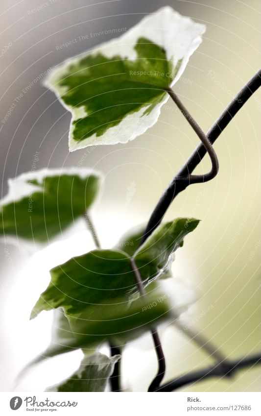 Water White Green Plant Leaf Calm Far-off places Life Style Spring Bright Decoration Delicate Concentrate Stalk Easy