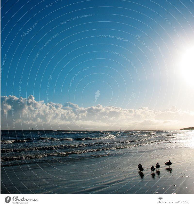 family idyll Duck Contrast Animal Beach To go for a walk Sun Clouds Altocumulus floccus Sky Waves Ocean Morning Sunrise Island Idyll Back-light Bird
