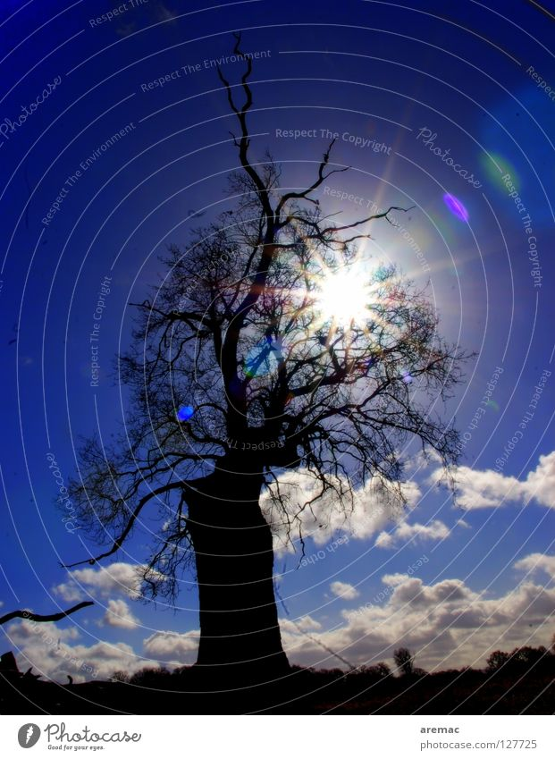 Light and shadow Tree Back-light Direct Celestial bodies and the universe Sun Silhouette Shadow sky.clouds Blue