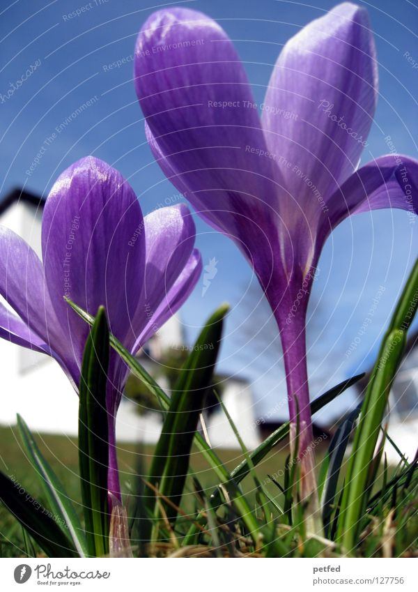 Beautiful Sky Flower Green Blue Vacation & Travel Life Above Grass Spring Beginning Perspective New Lawn Violet Under