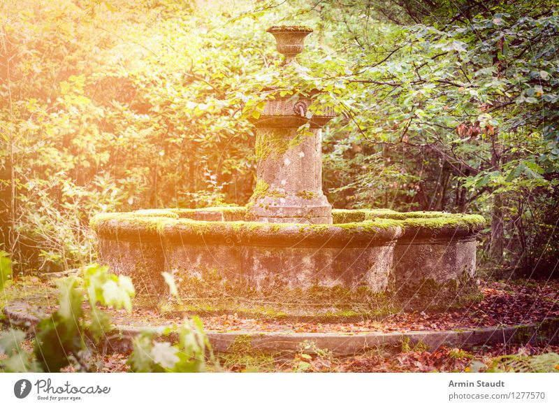 Nature Old Summer Dark Autumn Natural Garden Lifestyle Moody Park Design Dirty Esthetic Romance Mysterious Past