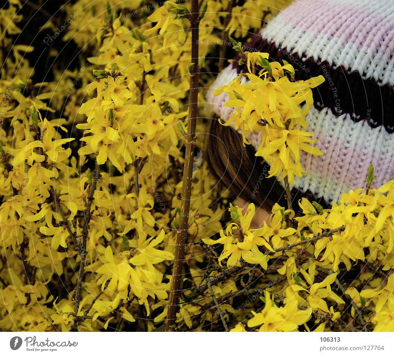 snoop Forsythia Plant Yellow Blossom Odor Spring Woman Bushes Spy Appraise Emotions Mysterious National security Attempt Attract Attraction Well-being