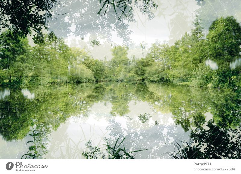 the lake Landscape Water Spring Summer Tree Forest Lakeside Pond Natural Green White Esthetic Contentment Mysterious Nature Calm Symmetry Environment Reflection