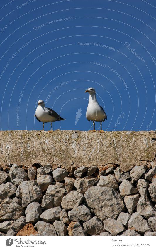 Fred & Rudi II Vacation & Travel Seagull Bird Wall (barrier) Clouds Majorca Flying Freedom Blue Stone Sky