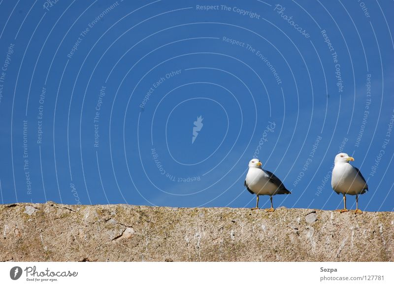 Fred & Rudi I Bird Air Wall (barrier) Clouds Audience Seagull Sky Blue Freedom Peace