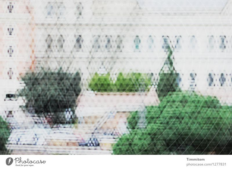 Green Black Emotions Gray Art Simple Italy Culture Vista Foliage plant Rome Interior courtyard Palace Inspection Mesh grid