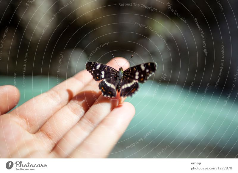 ticklish Hand Fingers Animal Wild animal Butterfly 1 Exceptional Uniqueness Love of animals Colour photo Exterior shot Close-up Macro (Extreme close-up) Day