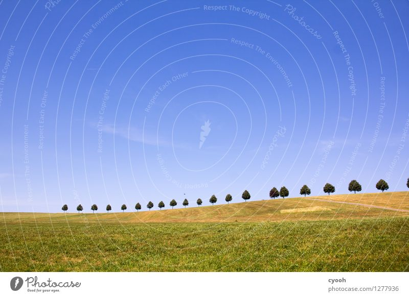 Sky Nature Blue Green Colour Summer Tree Relaxation Landscape Calm Far-off places Freedom Bright Horizon Field Idyll