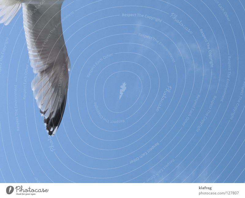 Sky Ocean Blue Summer Beach Vacation & Travel Freedom Bird Coast Wind Flying Feather Wing Seagull Black-headed gull