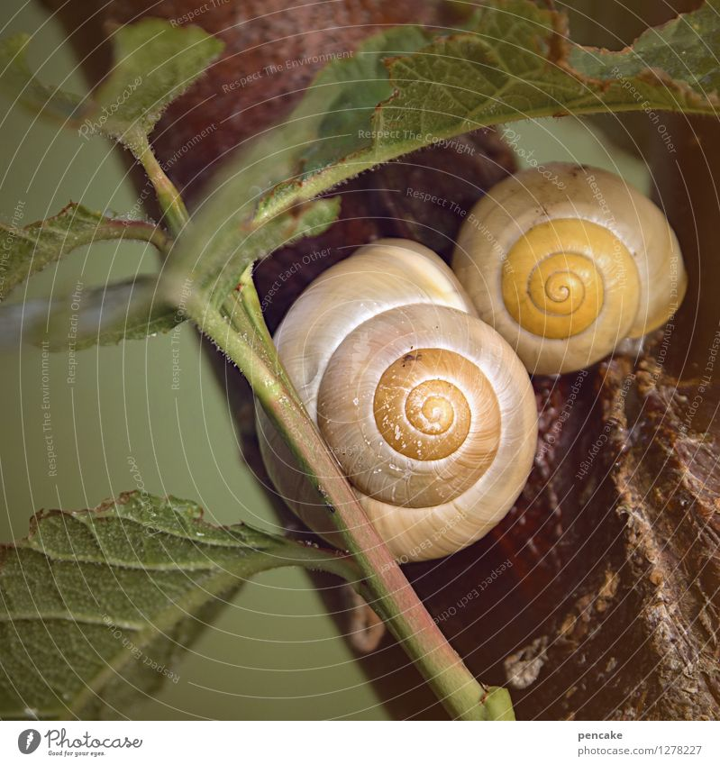 retirement Nature Spring Summer Leaf 2 Animal Sign Contentment Joie de vivre (Vitality) Loyalty Romance Peaceful Serene Calm Identity Uniqueness Life Protection