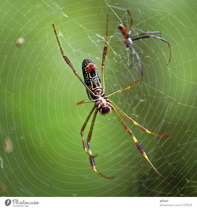 an unequal couple Spider Spider's web Animal Wilderness Dangerous Transience Cardiovascular system Kill To feed Catch Disastrous Dominant Captured Poison Green