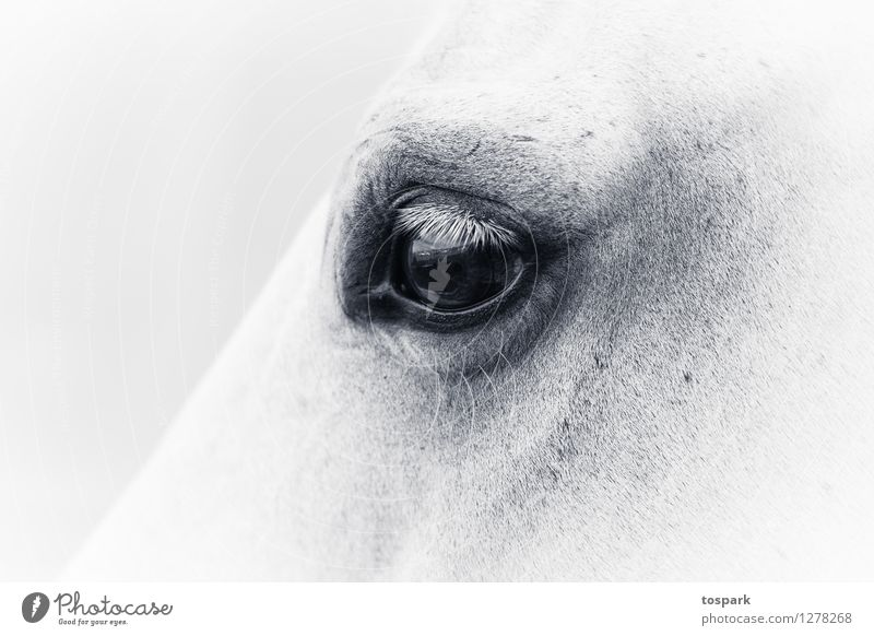 Vacation & Travel Beautiful White Relaxation Calm Animal Life Emotions Feminine Moody Dream Wild Elegant Warm-heartedness Horse Meditation