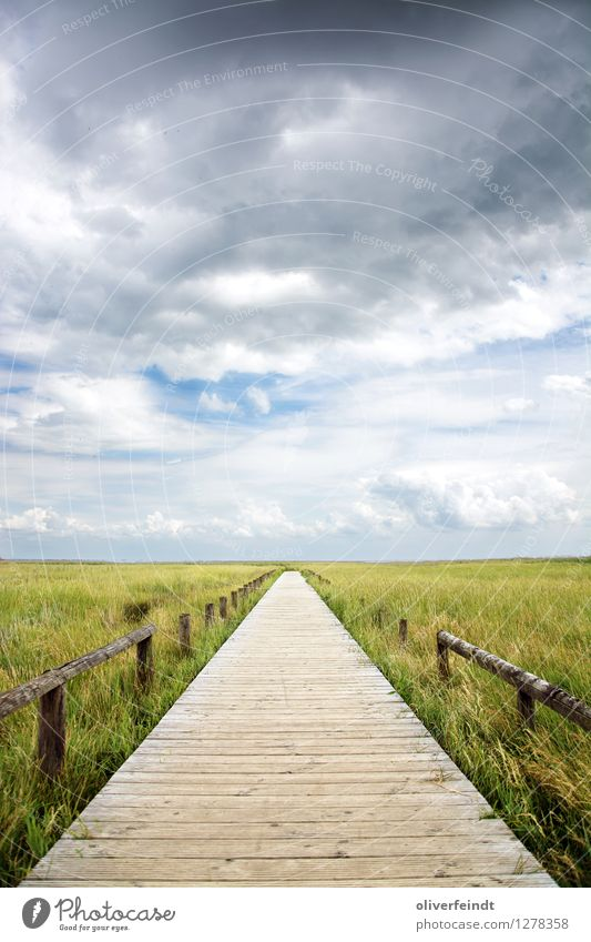Sky Nature Vacation & Travel Plant Beautiful Relaxation Landscape Clouds Calm Far-off places Beach Environment Lanes & trails Grass Coast Freedom