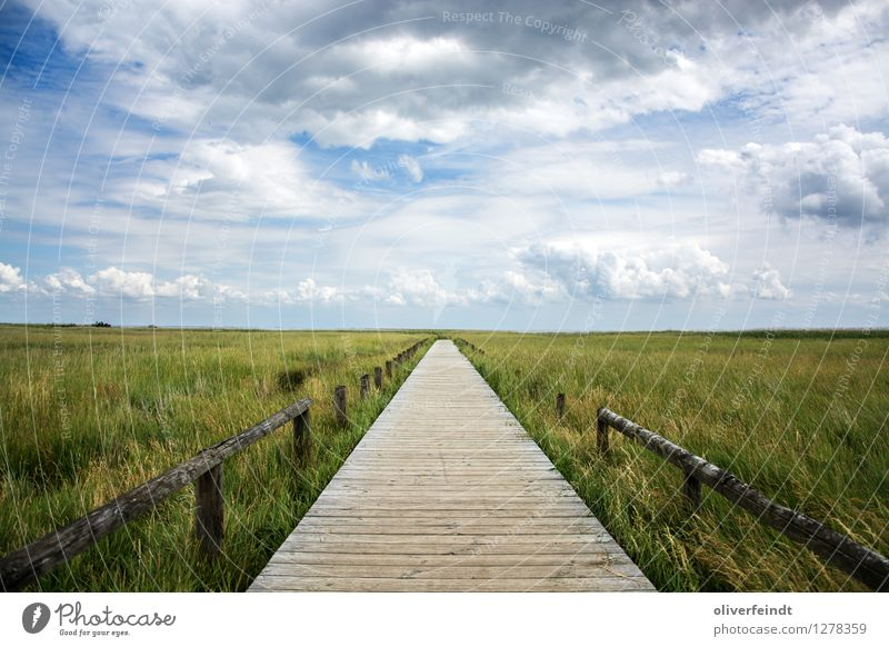 Sylt Vacation & Travel Tourism Trip Adventure Far-off places Freedom Expedition Environment Nature Landscape Sky Clouds Horizon Beautiful weather Grass Bushes
