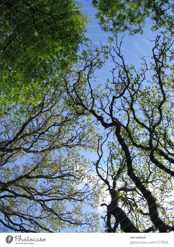 branches Branchage Tree Green Muddled Sky Overgrown