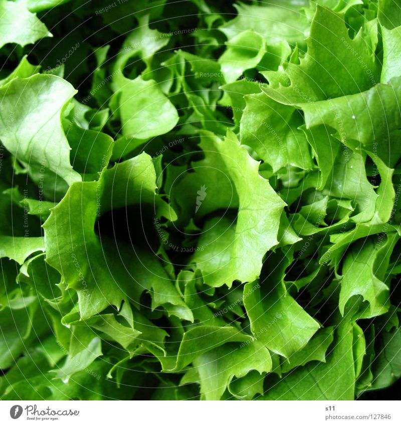 salad Food Vegetable Lettuce Salad Nutrition Organic produce Vegetarian diet Healthy Summer Oil Fresh Delicious Green Appetite Salad leaf Vitamin Dressing