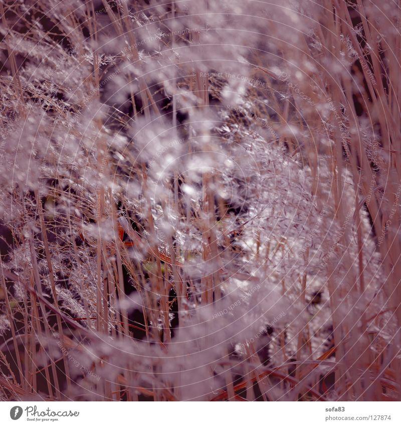 opaque Grass Spring Violet Sunbeam Pollen herald of spring heralds of spring