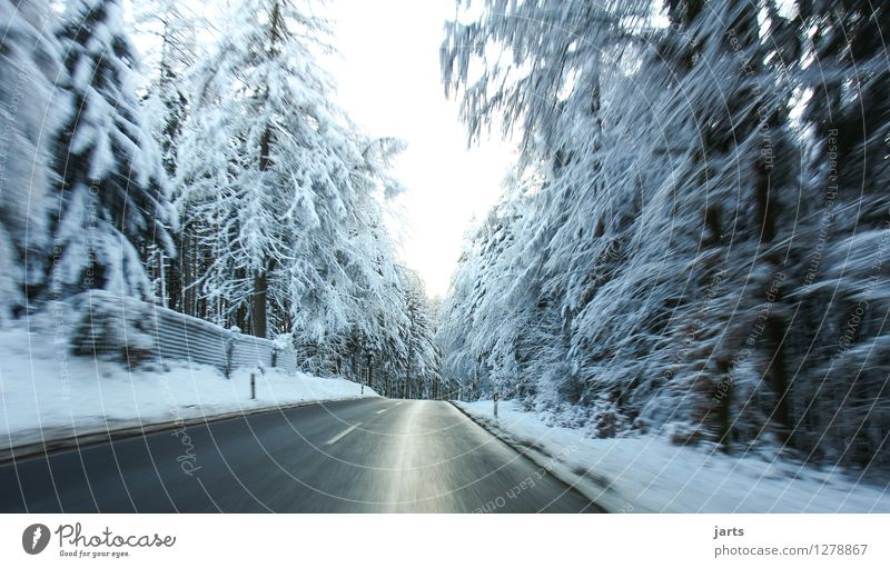 off to the cool Winter Weather Ice Frost Snow Snowfall Tree Forest Street Driving Fresh Wet Speed Nature Haste Colour photo Exterior shot Deserted