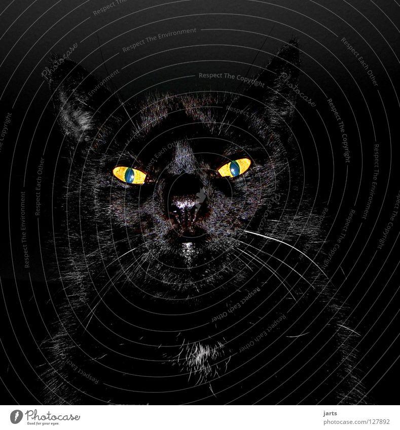 Black Animal Eyes Lamp Cat Fear Dangerous Creepy Mammal Panic Cuddly toy Vampire Hypnotic Cat eyes Werewolf