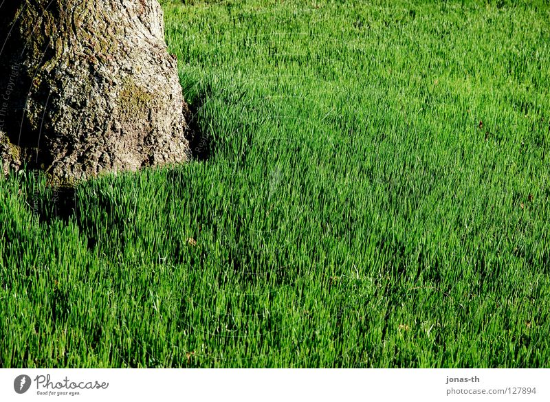 Tree Green Summer Relaxation Meadow Spring Field Lawn