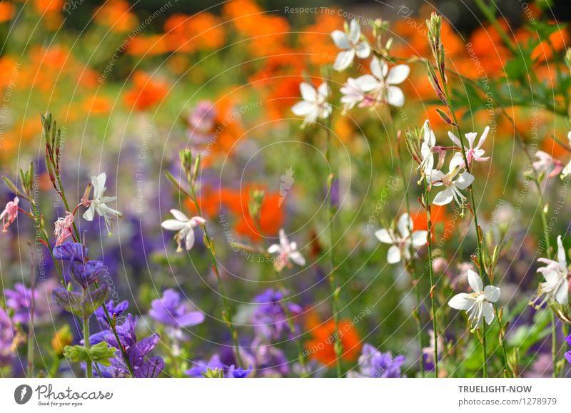 Nature Plant Green Beautiful White Relaxation Flower Life Blossom Garden Brown Park Orange Happiness Esthetic Joie de vivre (Vitality)