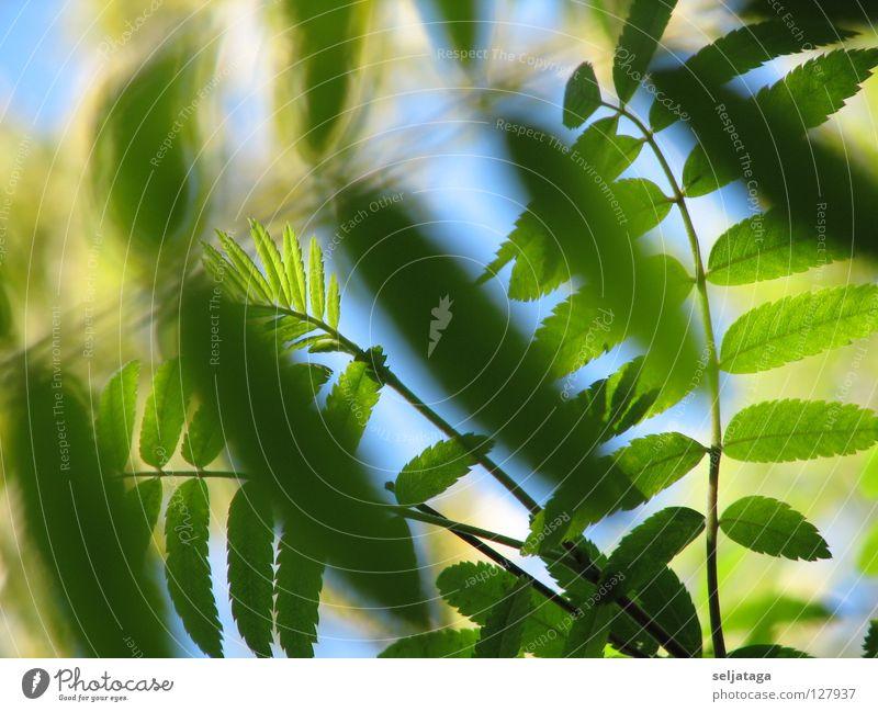 Nature Sky Plant