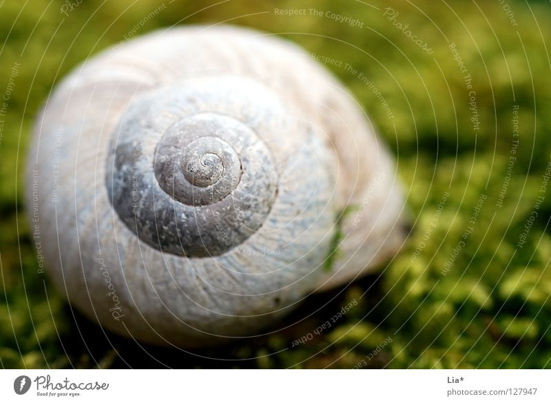 In the moss Snail shell House (Residential Structure) Spiral Rotated Vineyard snail Green Enchanted forest Lacking Rarity Lime Round Find Discovery Calm