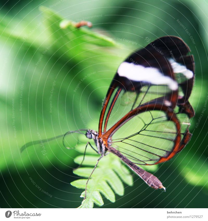 glass Nature Plant Animal Spring Summer Beautiful weather Tree Leaf Garden Park Meadow Wild animal Butterfly Wing 1 Observe Relaxation Flying To feed Sit
