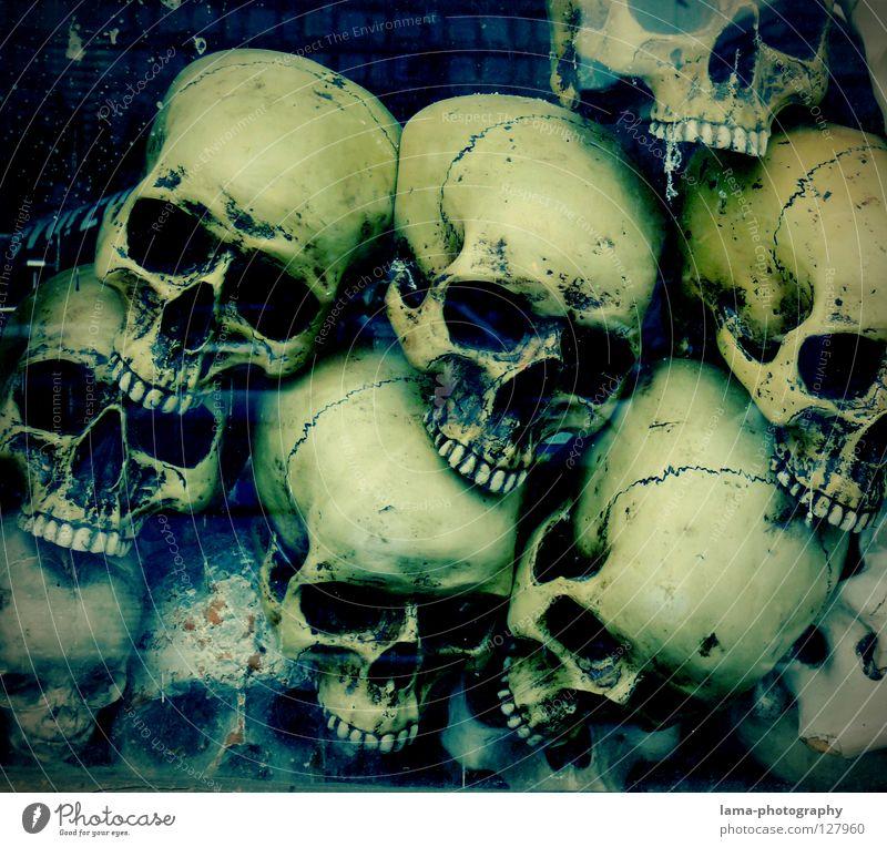 deep. skull Skeleton Brain and nervous system Disastrous Poisoned Drown Ocean Bottom of the sea Algae Creepy Horror film Fear Nightmare Grave Cemetery Dangerous