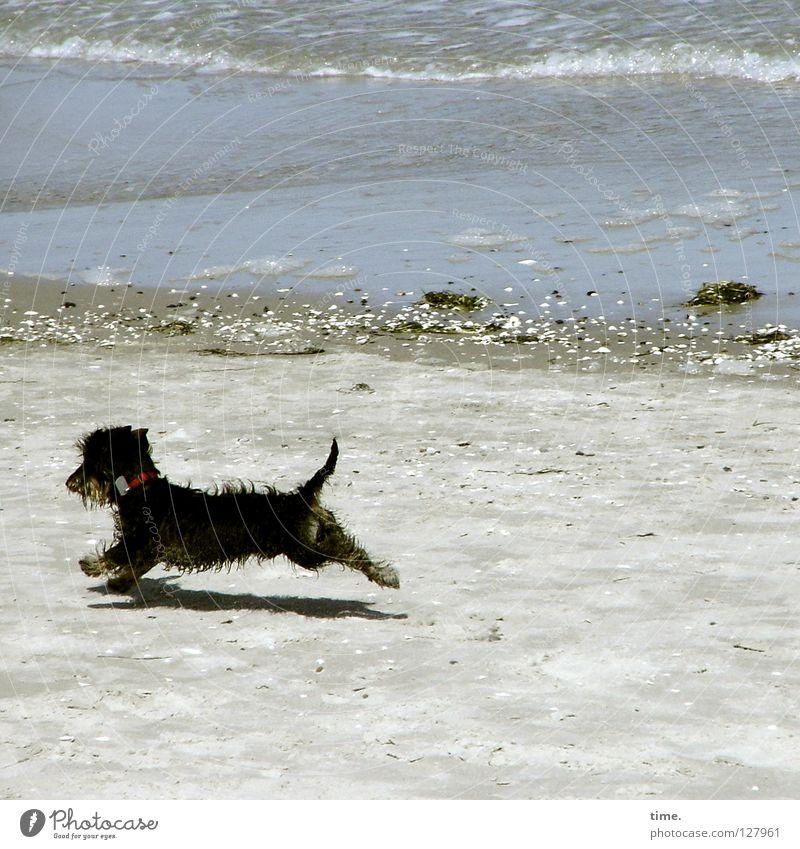 Dog Water Ocean Joy Beach Playing Sand Small Coast Stone Waves Flying Walking Running Hunting Baltic Sea