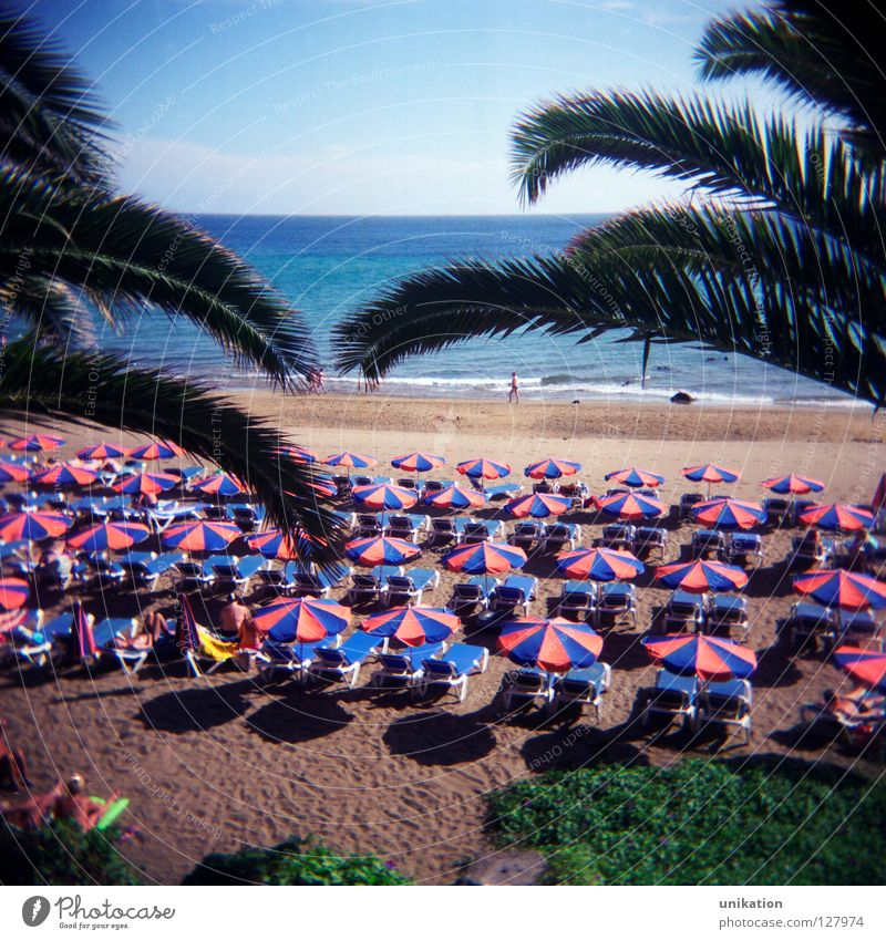 prospect Calm Vacation & Travel Tourism Beach Ocean Sky Horizon Summer Palm tree Far-off places Gloomy Sunshade Square Lanzarote Tourist Vantage point holiday