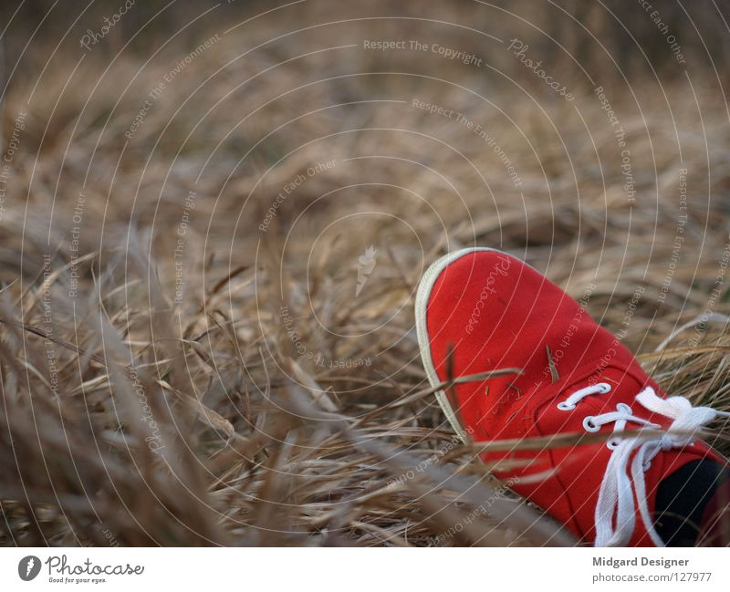 Red in the grass Summer Feet Nature Grass Field Footwear Sneakers Colour Straw Colour photo Multicoloured Exterior shot Close-up Day Evening Twilight Blur