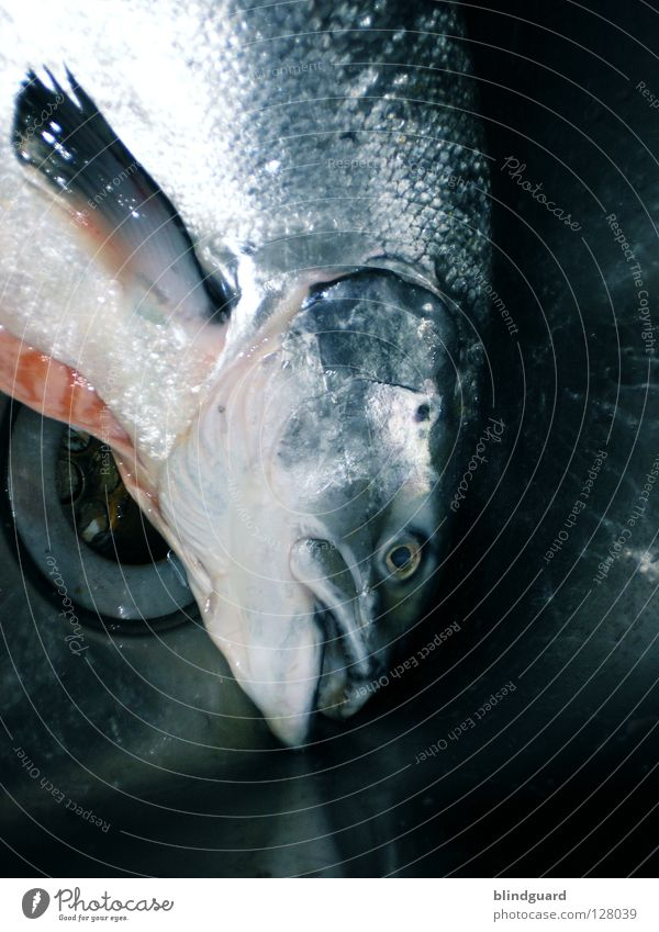 Water Eyes Death Religion and faith Glittering Fresh Large Nutrition Wet Cooking & Baking Symbols and metaphors Fish Kitchen Gastronomy Catch Bar