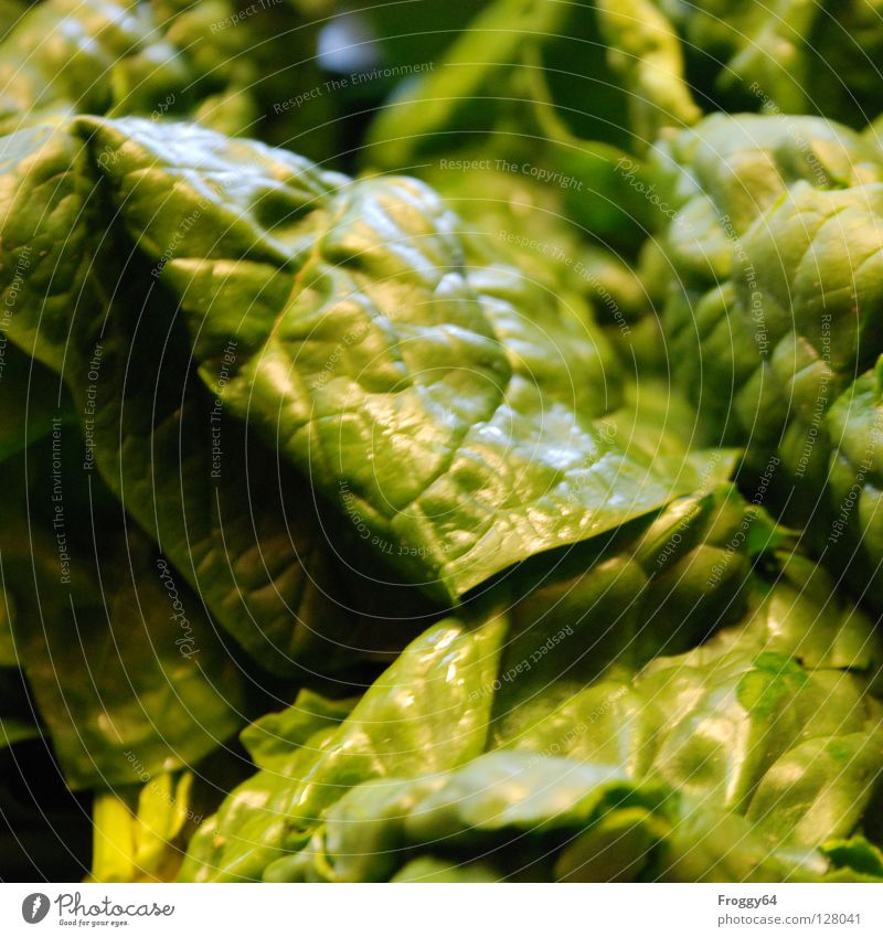 "<font color=""#ffff00"">-=Popeye´s=- proudly presents Vegetable Nutrition Nature Green Spinach Colour photo Interior shot Close-up Leaf Healthy Eating"