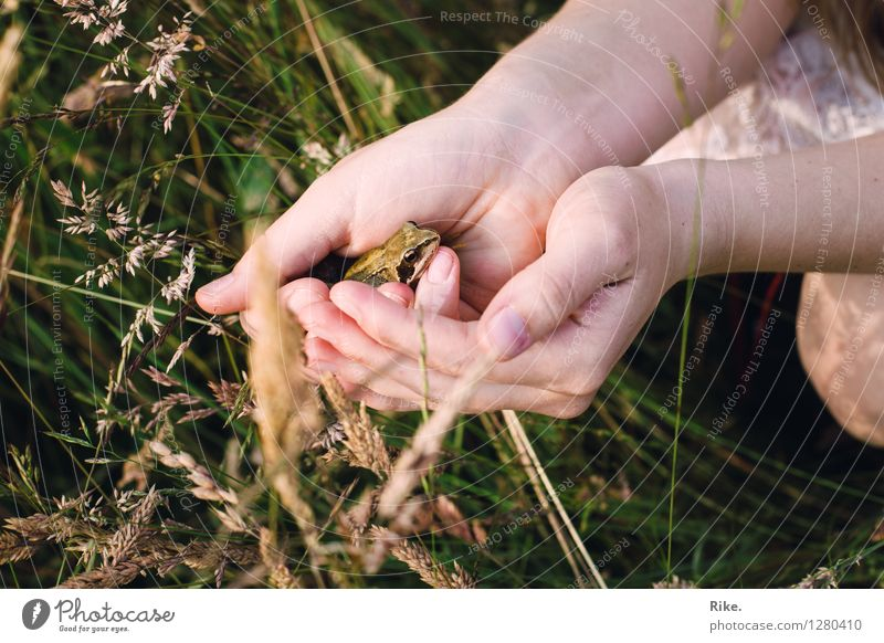 Nature Plant Summer Hand Animal Environment Meadow Grass Natural Friendship Observe Adventure Romance Touch Help Curiosity