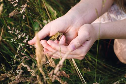 Nature Plant Summer Hand Animal Environment Meadow Grass Natural Friendship Observe Adventure Romance Touch Help Curiosity