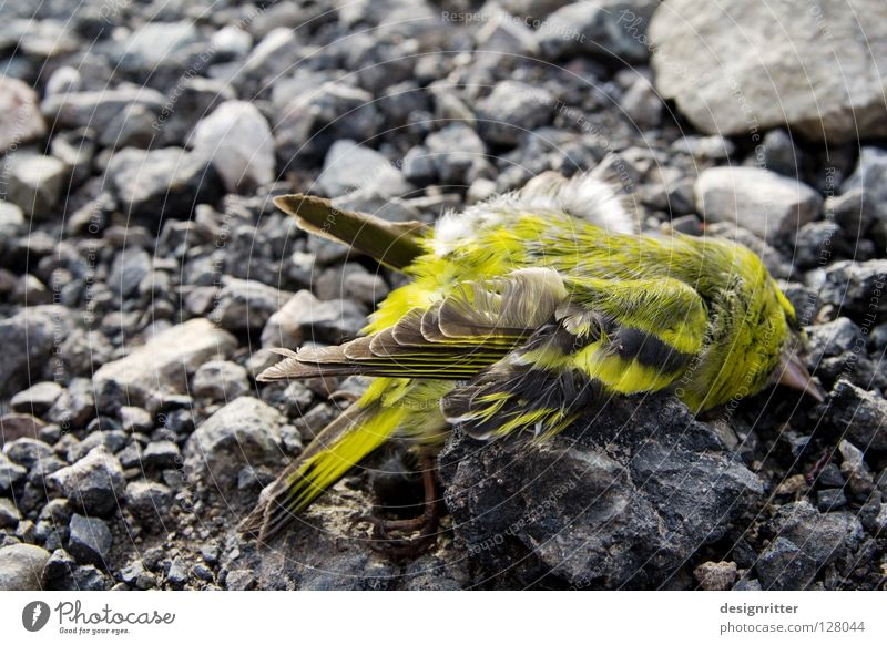 End of a journey Bird Green Yellow Greeny-yellow Death Crashed Sudden fall Terminus Accident Force Blood Harm Grief Lose Doomed Hope Life Live Feeble